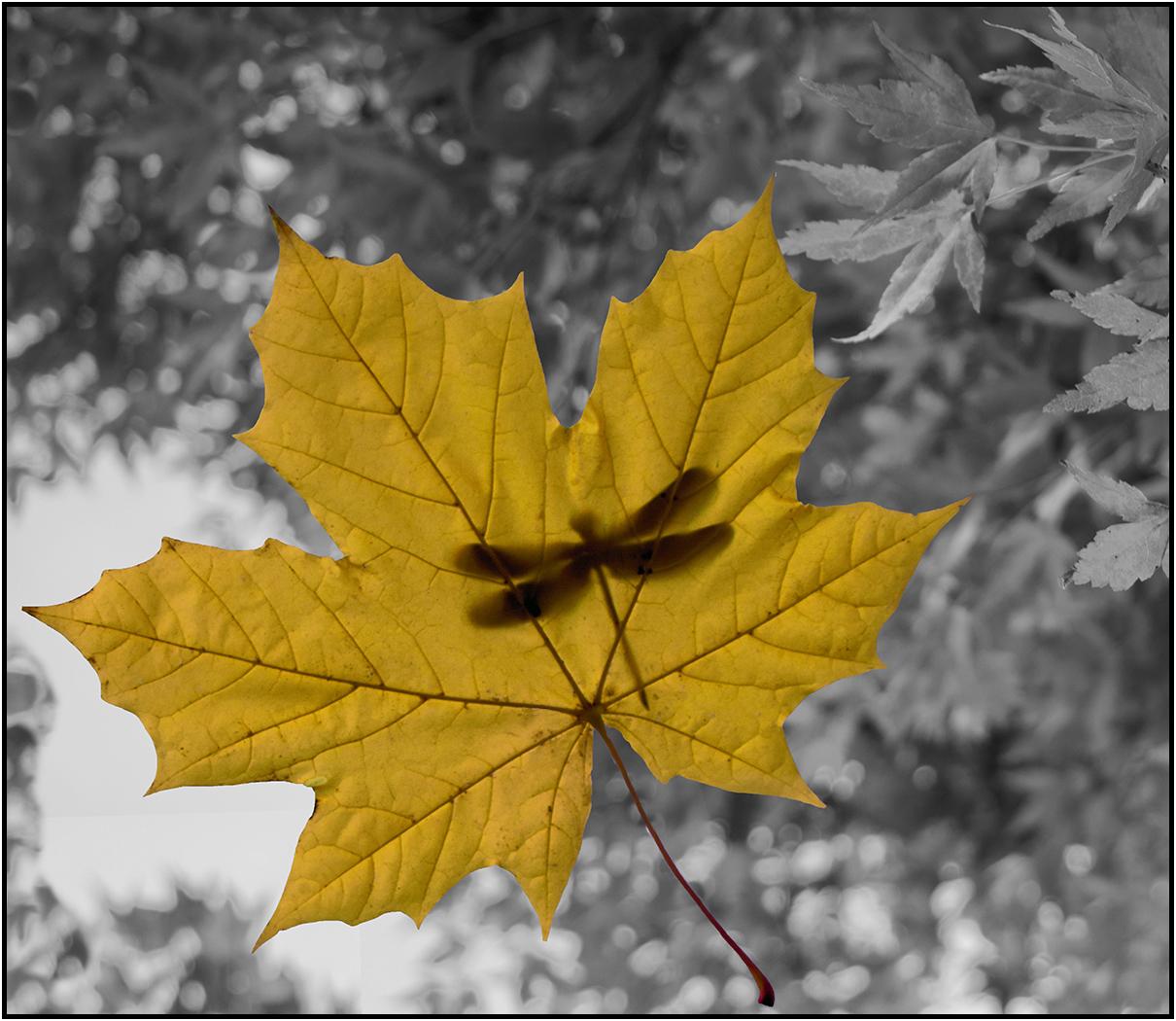 paul@autumnfruits[co[uk~PDI~Colour class~1