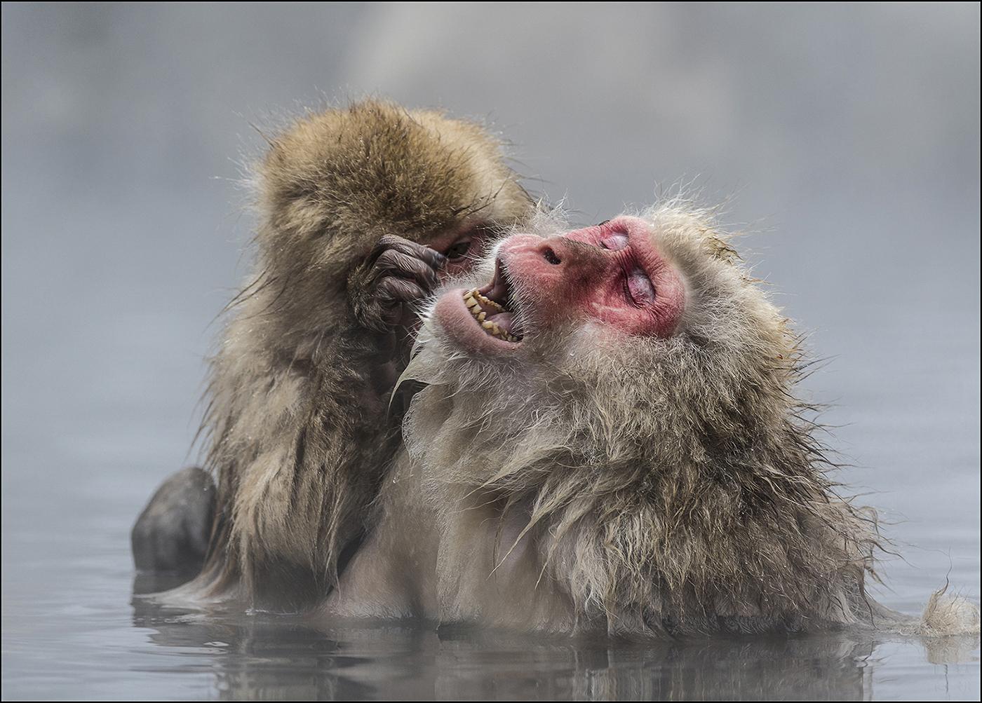 Grooming Monkeys - Peter Whitehead - BPE Ribbon